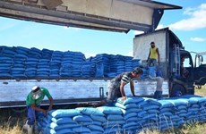 Philippines to slow down rice imports next year