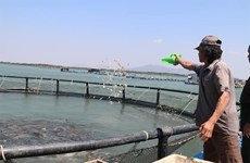 Vietnam begins to realise marine aquaculture potential