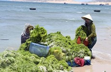 Vietnam, RoK work together toward green economy