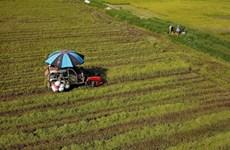 Land policies restrain Vietnam's agricultural development