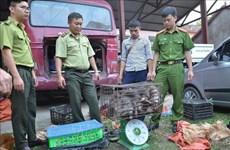 Dien Bien police seize large amount of trafficked wildlife animals