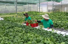 Tra Vinh focuses on developing quality seeds, seedlings