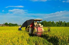 Vietnam Rice Festival to take place in Vinh Long in December