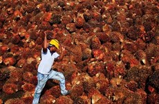 India resumes palm oil imports from Malaysia