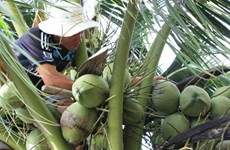 Over 200,000 visitors flock to Ben Tre coconut festival