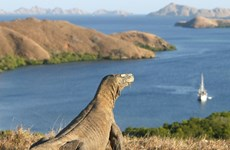 Indonesia targets 50,000 foreign tourists to Komodo island a year