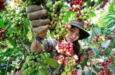 Third Vietnam Coffee Day to begin this weekend