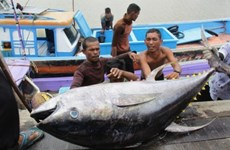 Indonesia plans to set up int'l fish markets
