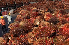 Malaysia's palm oil prices unlikely to drop next year