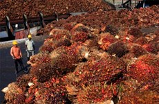 Malaysia plans to raise crude palm oil export tax
