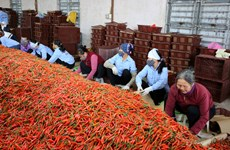 Stronger links between firms, farmers bolster agriculture in Bac Ninh
