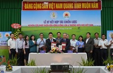 Company, research institute to develop new rice varieties