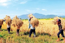 Cambodia's new strategy to push agriculture to modernise