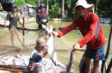 Fisheries sector to focus on standardising production for higher value