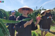 Binh Thuan launches tours to local dragon fruit gardens