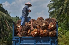 Indonesia ready to confront EU over palm oil discrimination