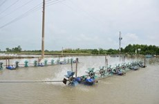Project helps Soc Trang sustainably exploit fisheries resources