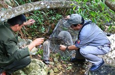 Wild animals released in Son Tra reserve