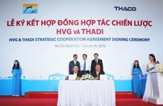 Thadi, HVG set up joint venture to raise 1.2 million pigs per year