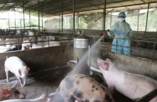 Vietnam, France partner in producing veterinary vaccines