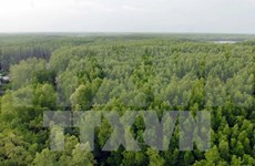 VN's national forest stewardship standard effective from May