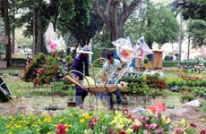 HCM City gets busy with flower festivals, markets ahead of Tet