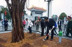 Hanoi to plant about 120,000 new trees this spring
