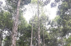 Quang Tri to plant 60,000ha of forests by 2030