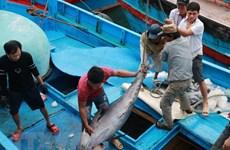 Khanh Hoa: ocean tuna boats return to shore