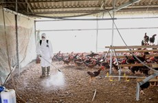 Minister urges early detection of avian influenza outbreaks