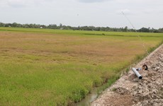 Drought, saltwater intrusion threatens farming, local life in Mekong Delta