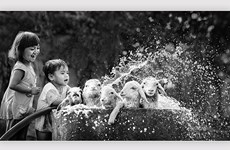 Balkan Exhibition honours Vietnamese photographers
