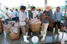 Kien Giang province unveils numerous measures to improve fishermen's lot