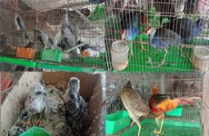 Ministry requests tightened control of wildlife trafficking, consumption