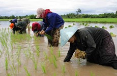 Laos earns more from rice exports to China