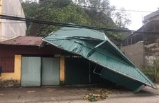 Whirlwinds, hails injure six in Yen Bai