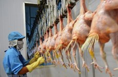 Vietnam exports processed chicken to Russia
