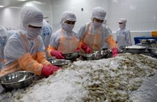 Shrimp exporters in Mekong Delta face challenges amid Covid-19