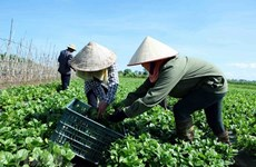 Vietnam to release white book on cooperatives