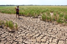 Central region at high risk of drought: official