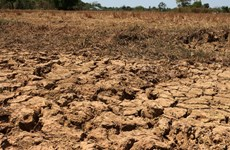 Drought hits agricultural production in Cambodia