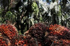 Malaysia desires to resolve palm oil spat with India