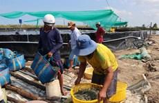 Kien Giang to expand industrial shrimp farming