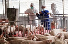 Vietnam's pork imports up over 200 percent