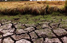 UNDP assists Mekong Delta in drought response efforts