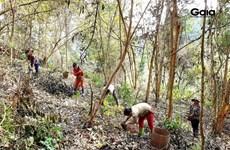 Nature reserve's seven ha of forested habitat for endangered species restored