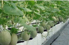 HCM City's agricultural production value up 4.3 percent in Q1