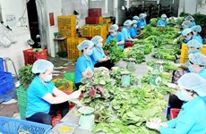New 40 agricultural firms set up in HCM City in three months