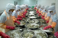 Ca Mau province works to ease pandemic's impact on shrimp export