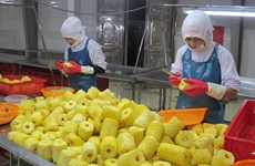 Vietnamese firms strive to revitalise agricultural exports to China
